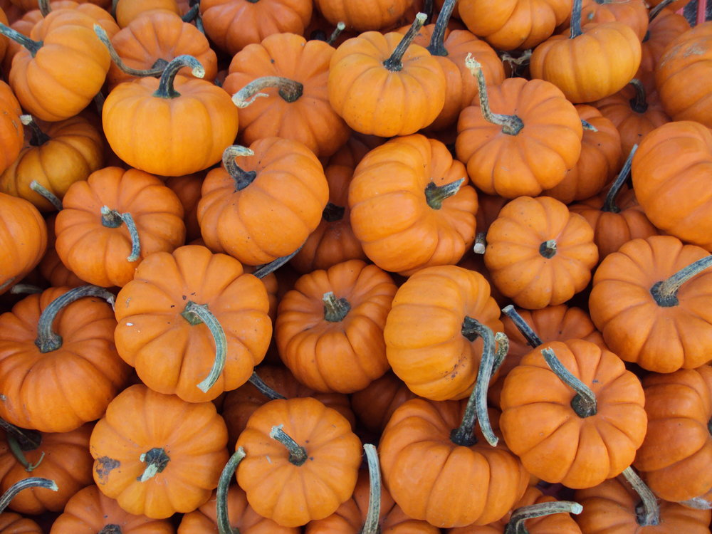 In love with all things pumpkin this season. Don't let those Halloween pumpkins go to waste!