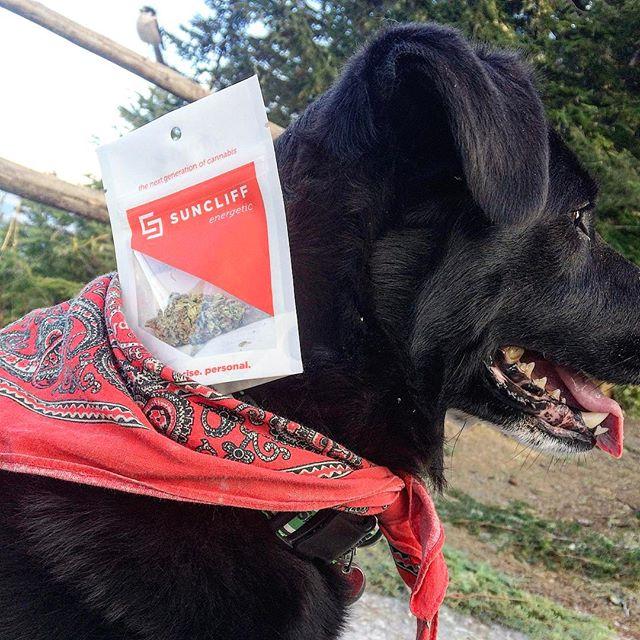 Pup Pup Pass 😉🐶