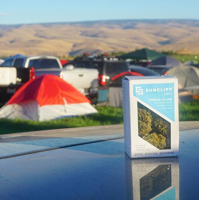 #throwback to Jack Johnson at the Gorge last weekend with our favorite concert companion Purple OG #18