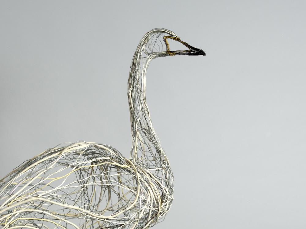 Standing Whooper Swan