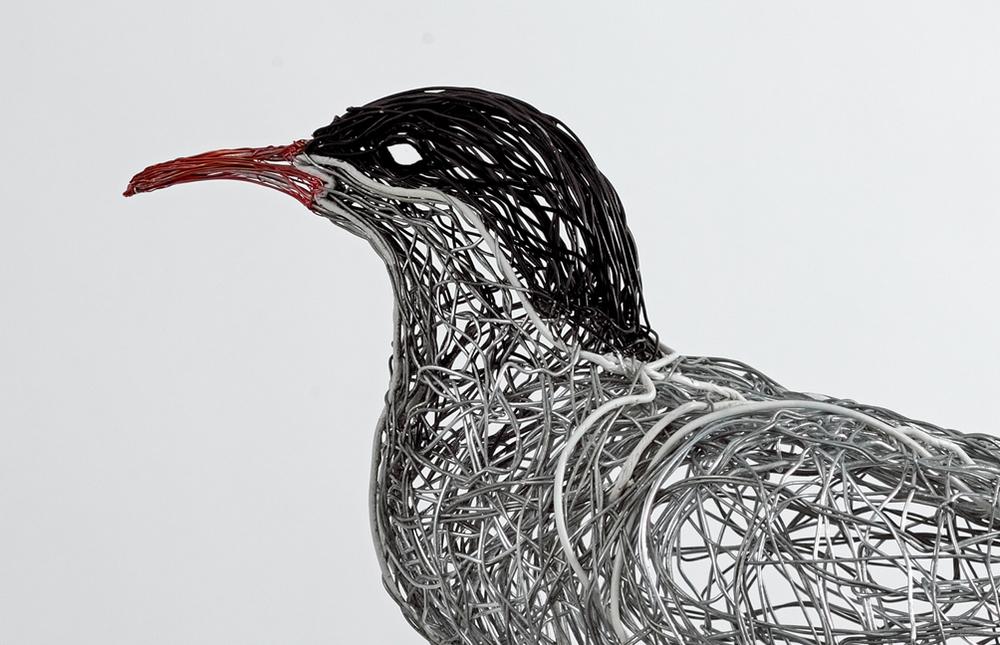 Arctic Tern (detail)