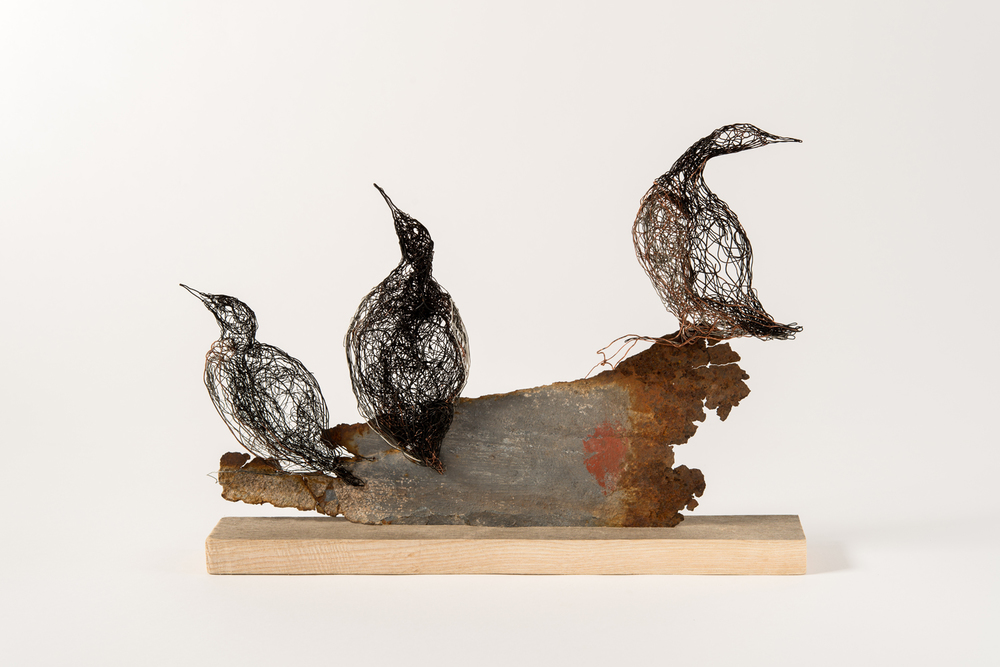 Guillemot's on Rock