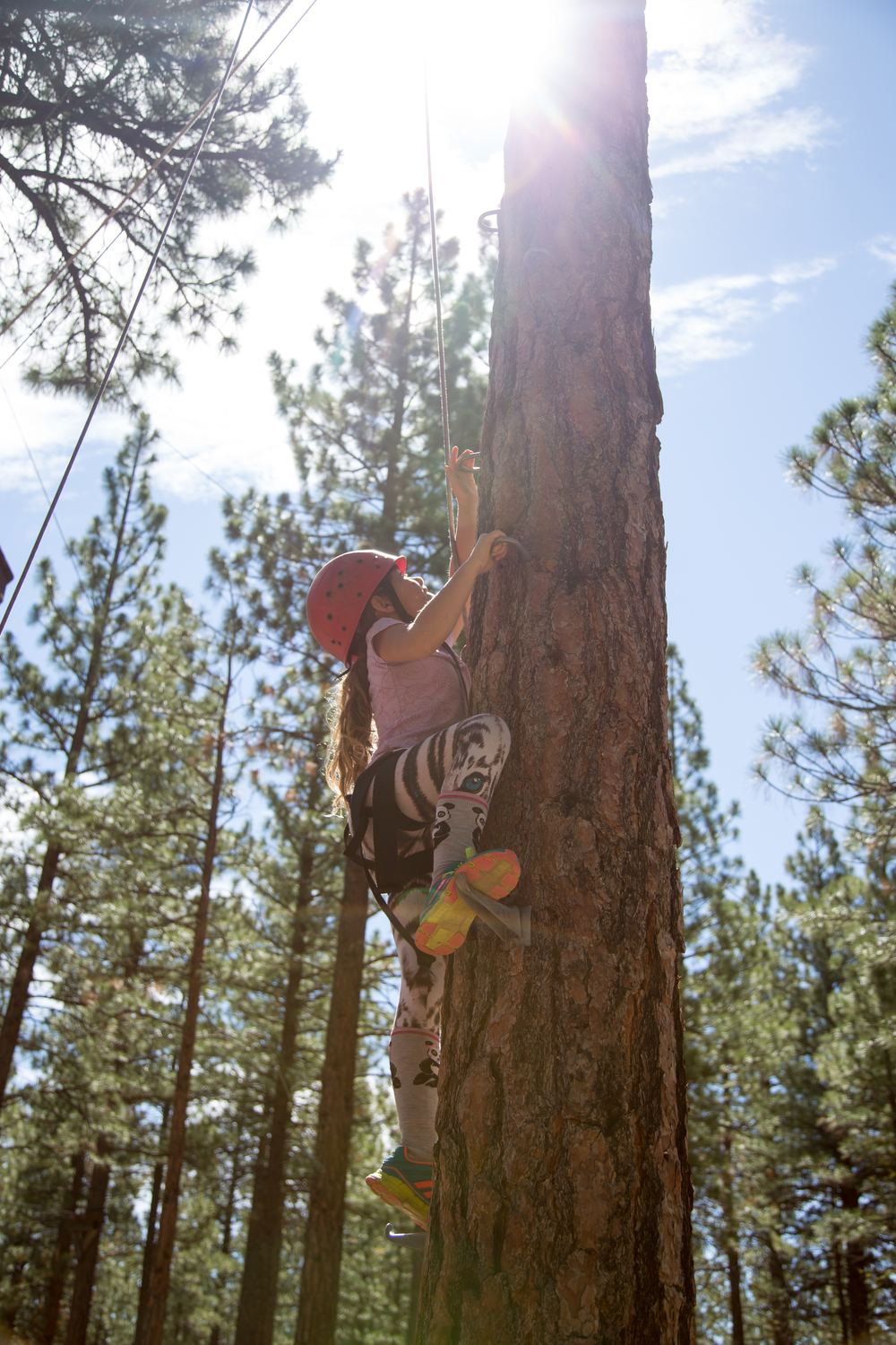 A girl climbs a tree at Grizzly Creek Ranch while learning science in the outdoors.