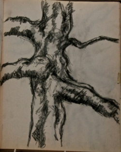 Tree Trunk 1970s. Charcoal pencil on paper.