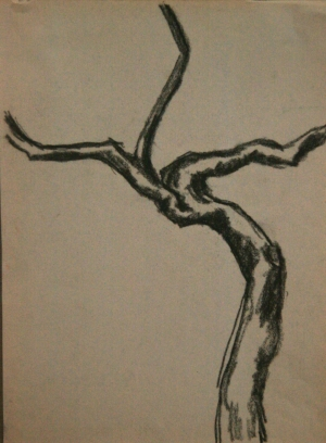 Tree-Washington Square Park. Charcoal pencil. 1970s.