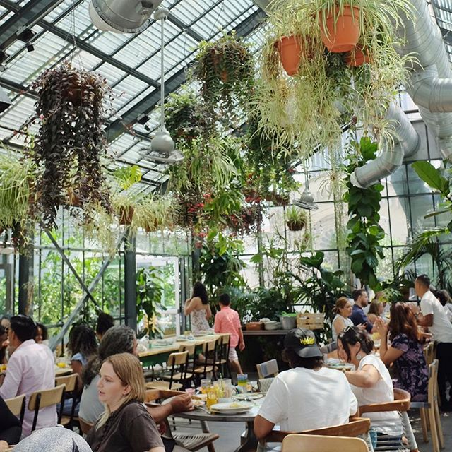 🌱🌿🍃greenhouse vibes at Commissary at @thelinehotel