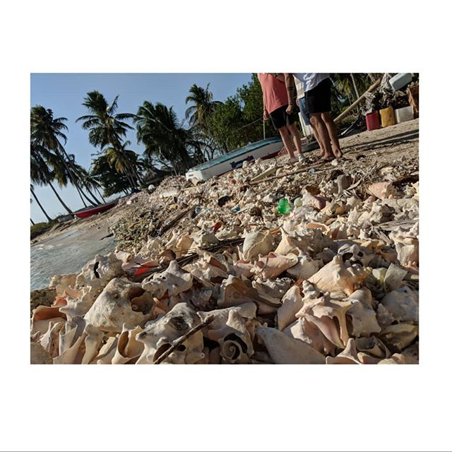 """""""Just toss it in the shell pile."""" Ocean rubble (and trash) on Isla Mucura. • • • • #millennialsearchformeaning #thesearchcontinues #digitalnomad #colombia #mucura #vacay #tropicalisland #caribbean"""