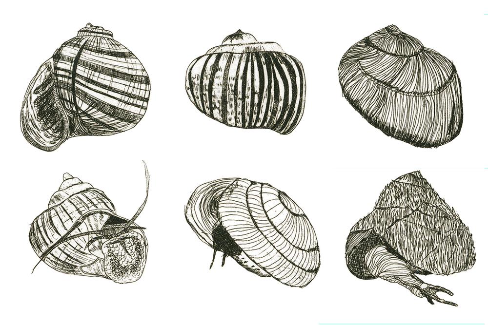 snail metal.jpg