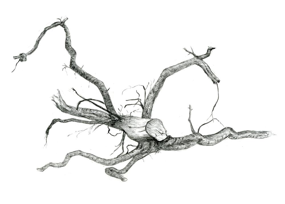 3-root-5x7.jpg