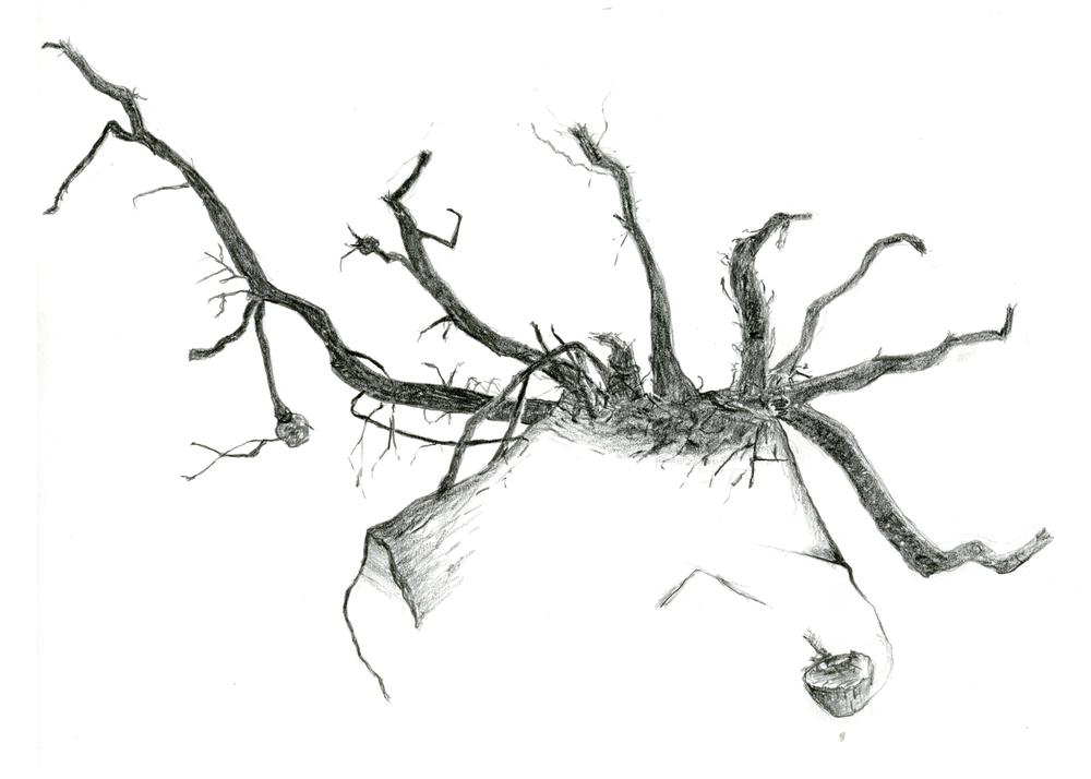 4-roots metal 5x7.jpg