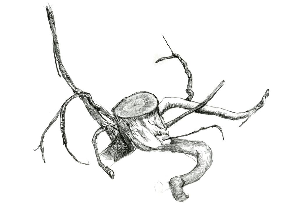 5-roots-metal 5x7.jpg