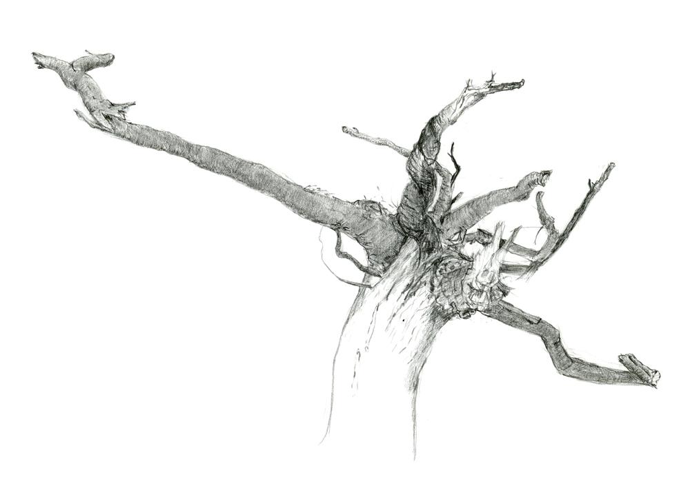 6-roots-metal 5x7.jpg