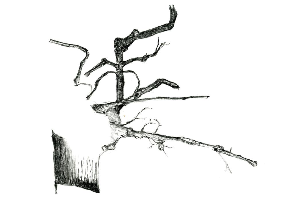 7-root-metal-5x7.jpg