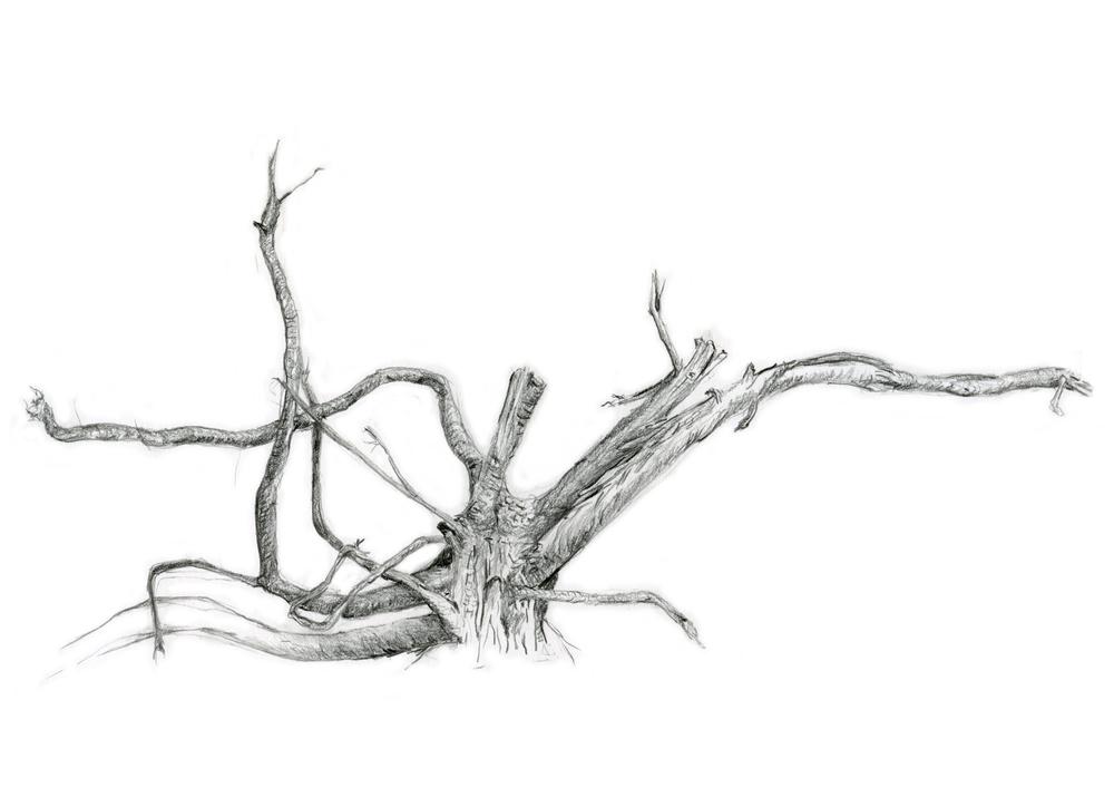 8-root-metal-5x7.jpg