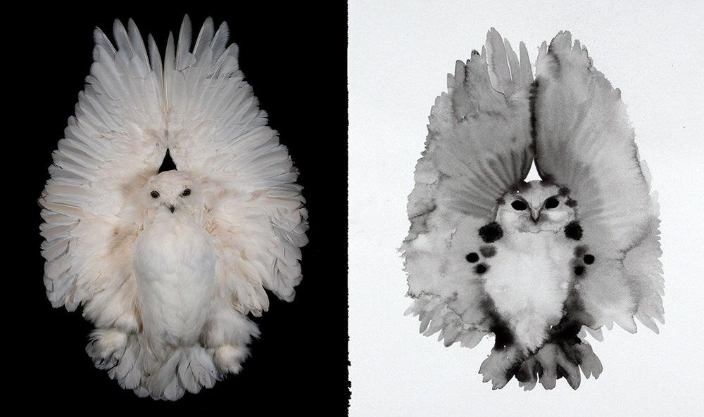 2 owls.jpg