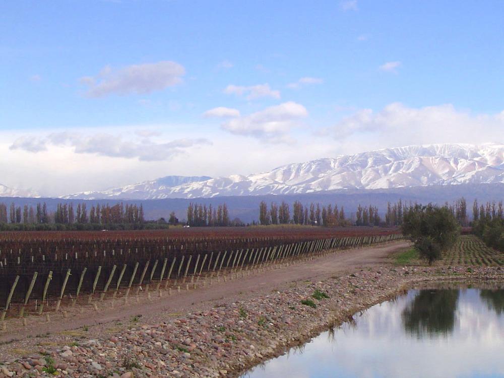 Lagarde Winery Vineyards
