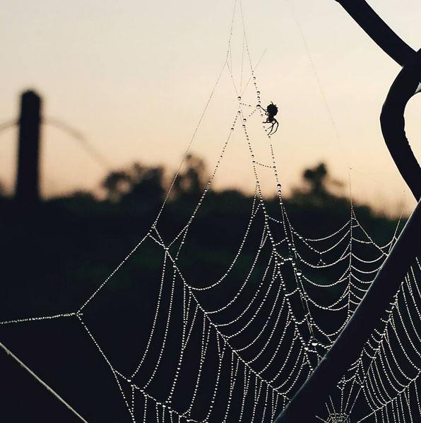 Instagrammer Brandon Shirley (@brandons_lens)'s shot of a spider web.