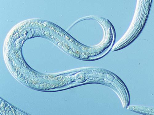 Photo courtesy of Society for Mucosal Immunology