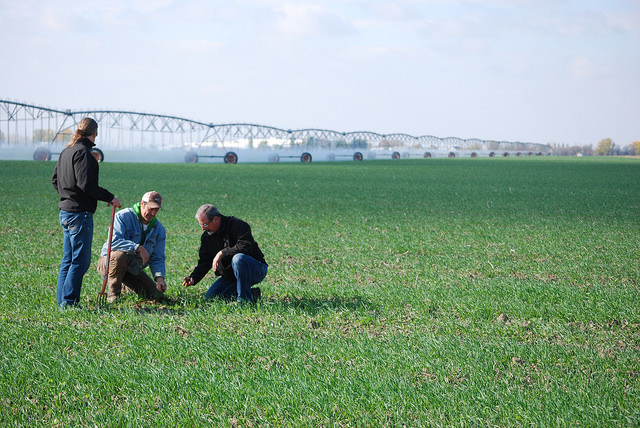 The Perry brothers, Chris & Harold, with Jeff Bronsch, checking crops