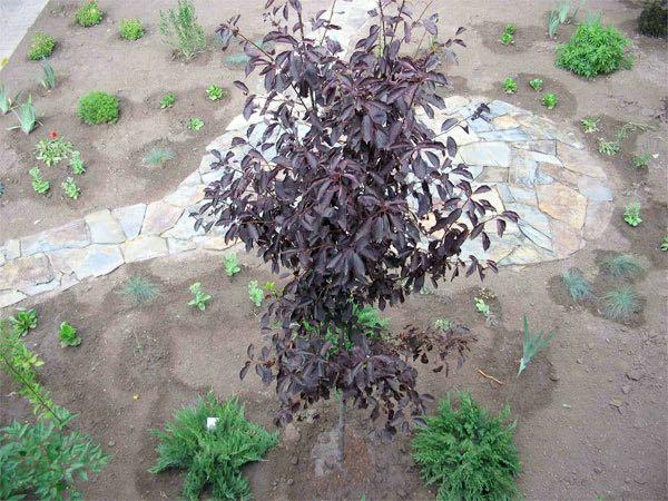 how.planting1.jpg