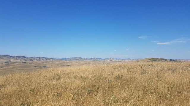 It's dry out there! Photo from our weed pull at the end of July along highway 22.