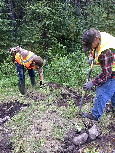 Planting seedlings along Hidden Creek. July 26, 2018.