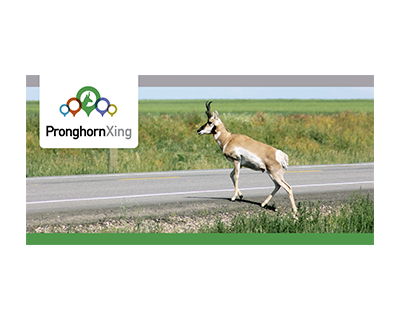 Pronghorn Xing - Help scientists better understand pronghorn migration & road mortality by recording sightings using an app!