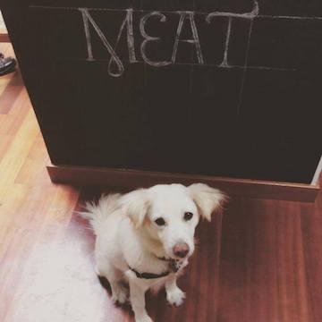 Beeks the Bacon Addict