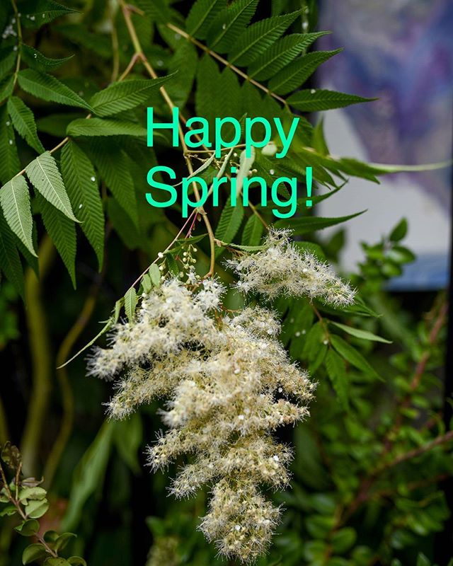 "Spring is natures way of saying ""let's party"" ~ Robin Williams Photography @chrisocken"
