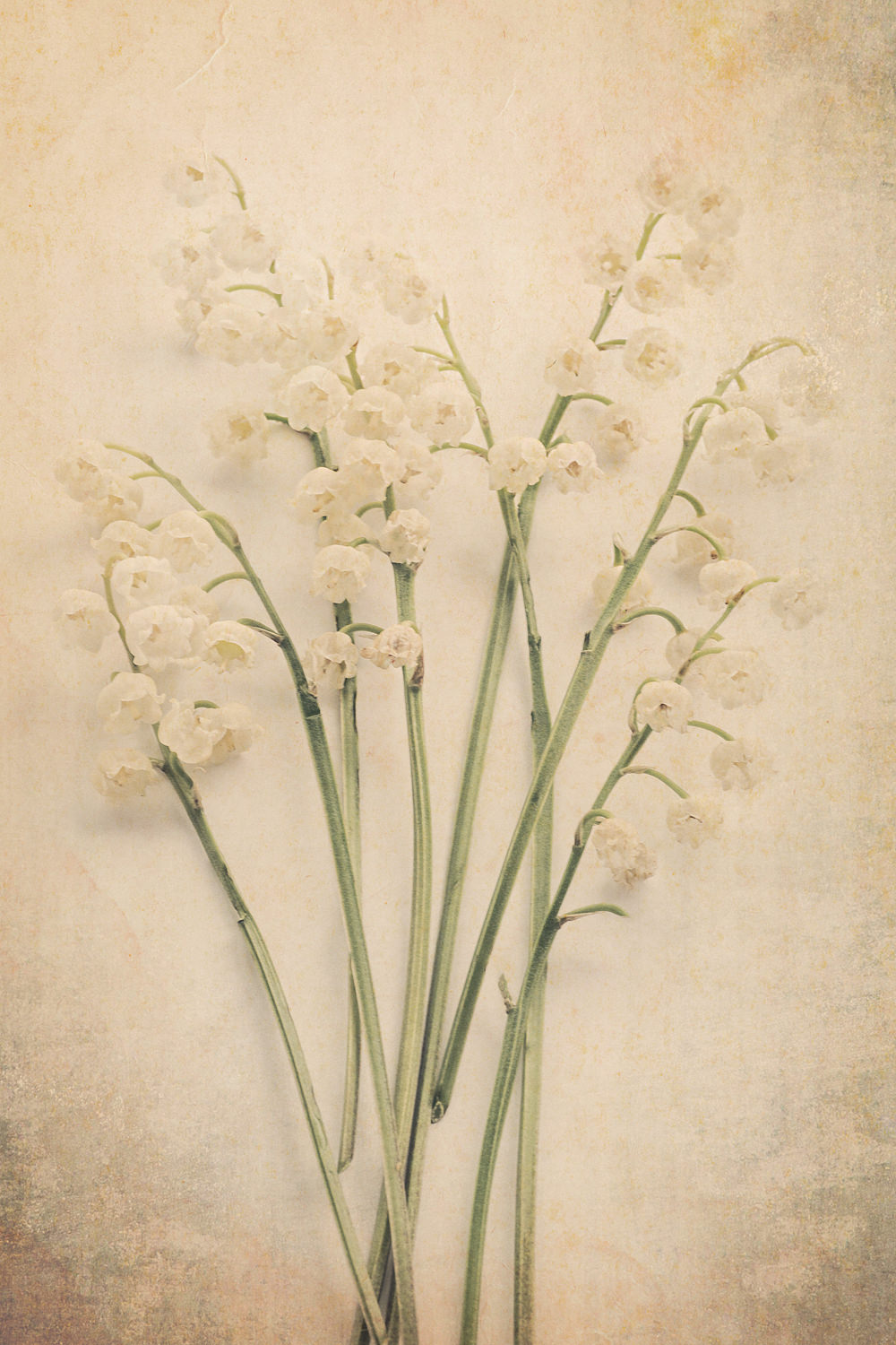 Scents of Spring - Lily of the Valley v