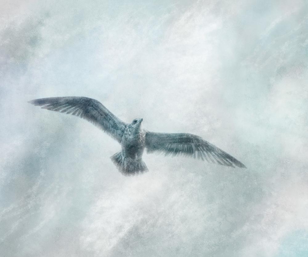 Solitary Seabird i