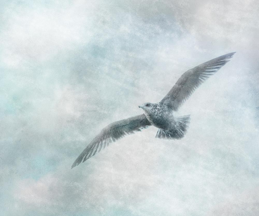 Solitary Seabird ii