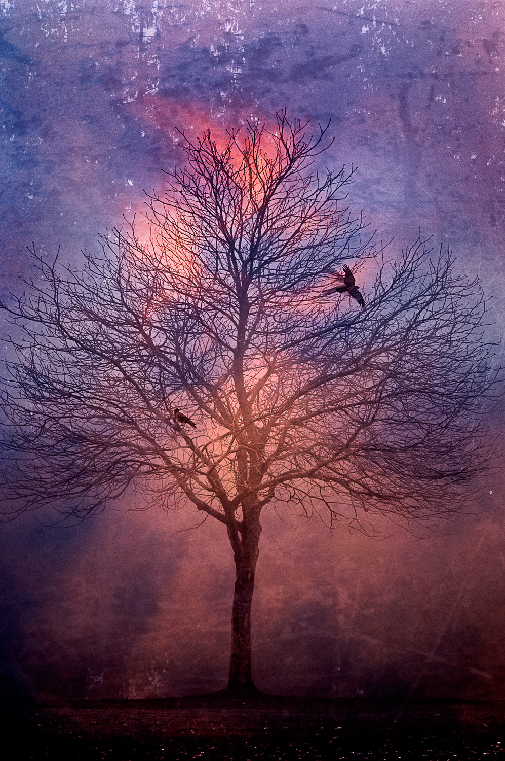 Winter's Tree At Dawn