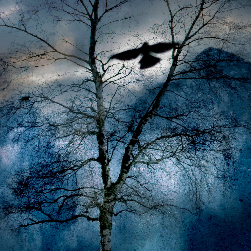Winter's Crow
