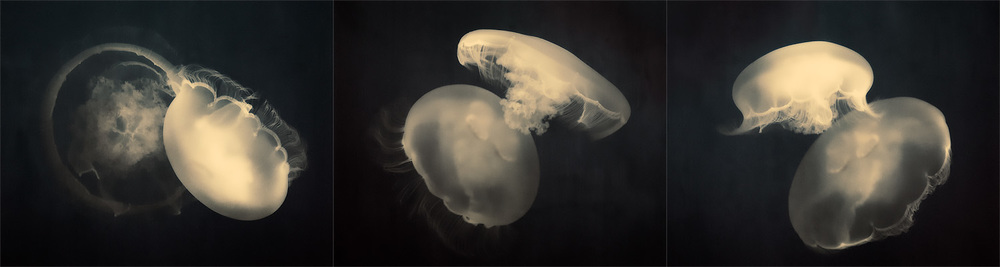 Moon Jellies i, ii & iii