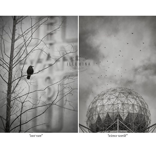 "Finally a couple of new ones for my ""Raincity"" series! ""East Van"" and ""Science World"". I probably won't win any awards for these uncharacteristically unpoetic image titles 😄. Both these images feature our ubiquitous Vancouver crows. Love them or not, they're everywhere. I choose to love them! #vancouver #raincity #drearyvancouver #crowsandravens #blackandwhitephotography #illuminaphotographics"