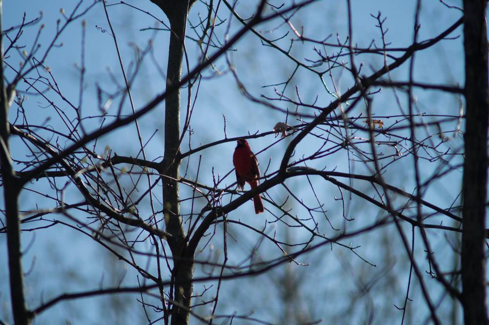 cardinal-in-trees