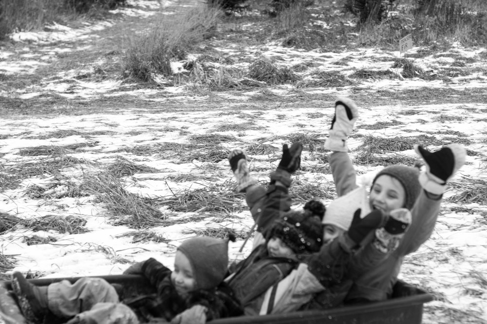 Christmas Tree Chop Festive Kids Sledding by Samantha Spigos
