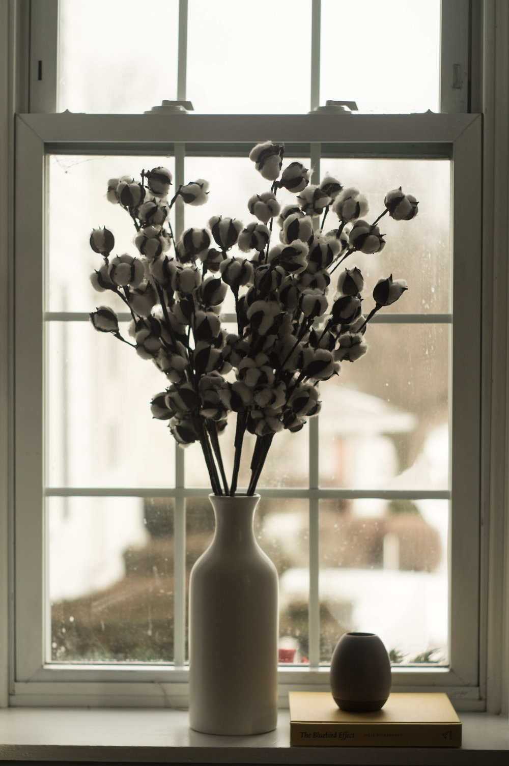 cotton pods flower vase windowsill image by samantha spigos