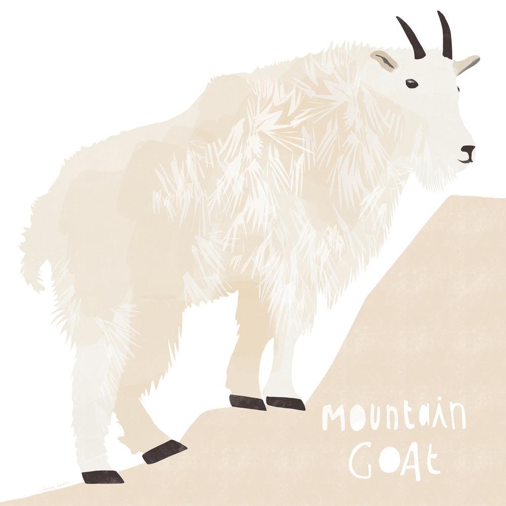 mountain goat portfolio.jpg