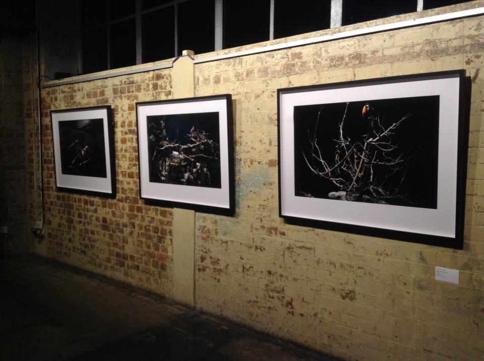 Plenty  install image courtesy of Renata Buziak.