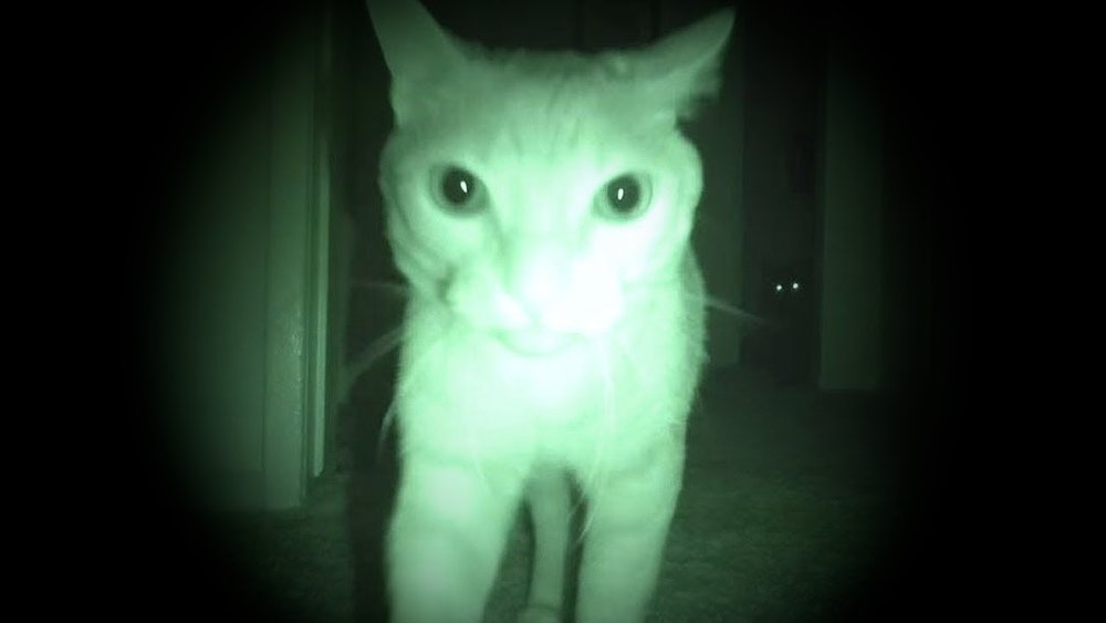 ghost cat 1-vignette.jpg