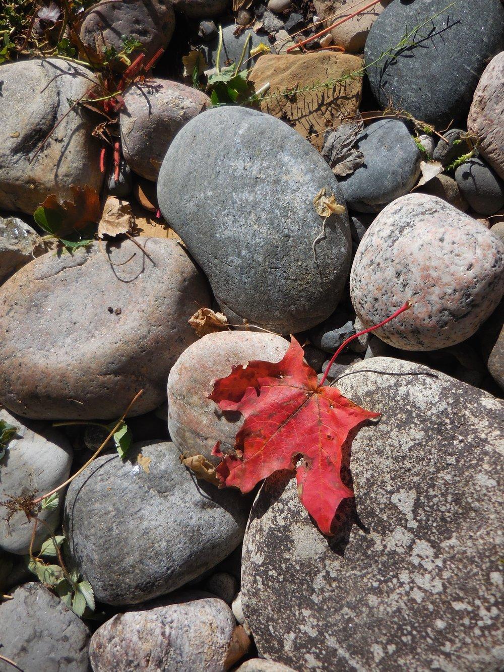 Stone Garden in Fall.jpg