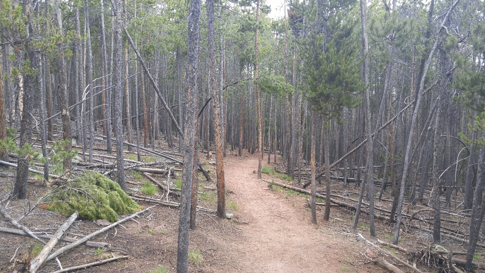 Up into the lodgepoles