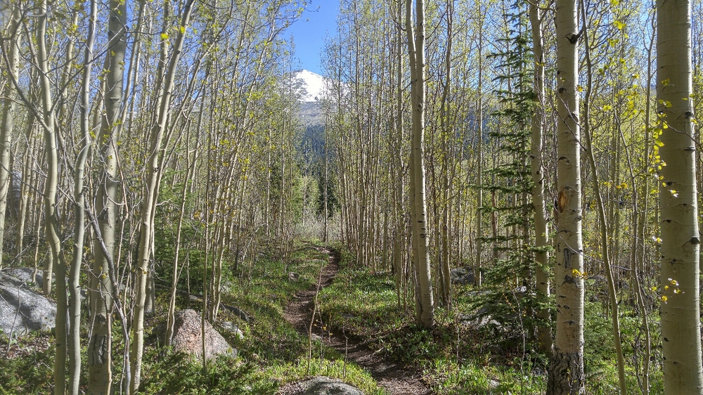 As usual, the singletrack gets better as you get further from the trail head