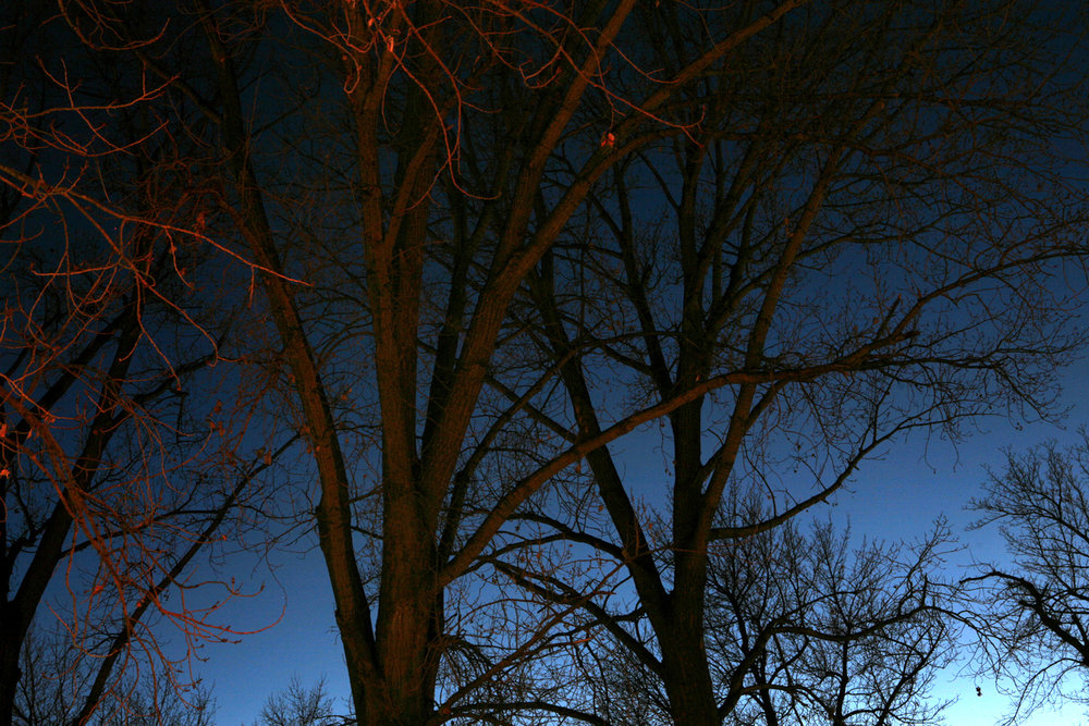 creepytrees lores.jpg
