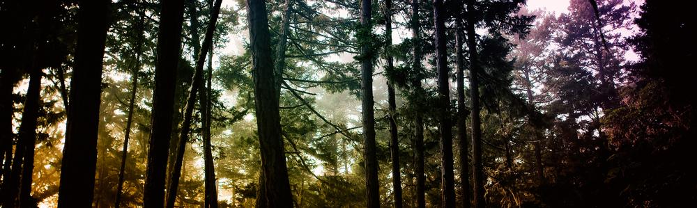 Treetest-copy.jpg