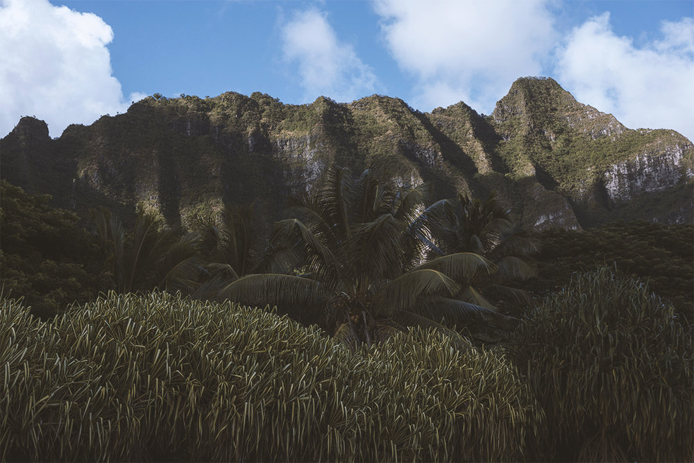 drive_around_the_island_landscape.jpg