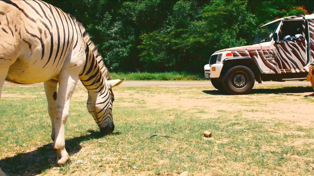 Zebra in the Foreground, my Zebra Truck in the back. Credit: George Kirkinis.