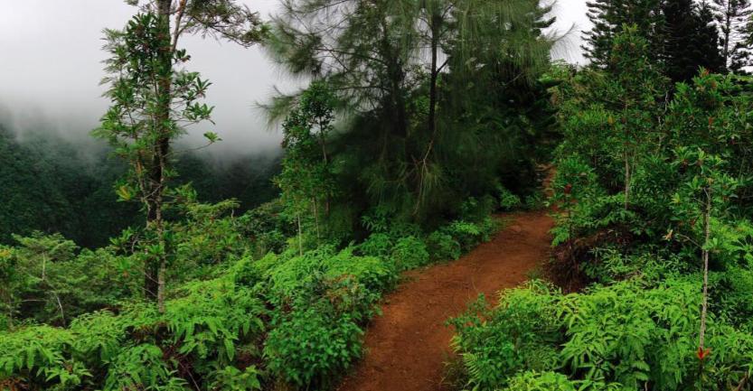 Kuliouou trail